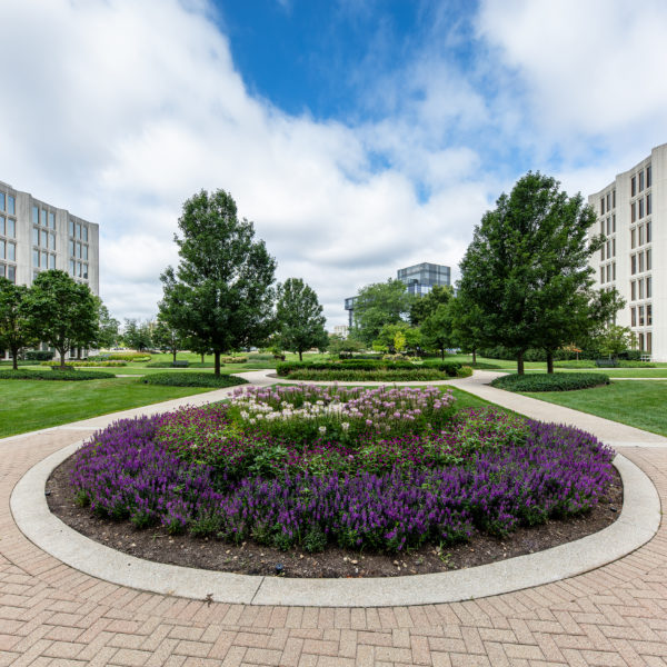 Flowers and gardens at the Zeller owned Commerce Plaza office building in Oak Brook, IL.